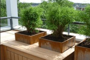Onderhoudsvrije tuin aanleggen